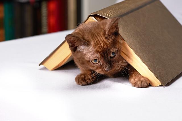 Γάτα στη γλάστρα; Οχι πιά!