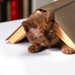 Γάτα στη γλάστρα;