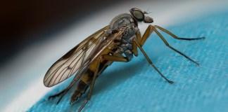 Αφησαν περιττώματα οι μύγες στο βιβλίο;