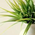 Πως θα αντέξουν τα φυτά χωρίς πότισμα