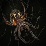 Τι  λένε οι Σκοτσέζοι για τις αράχνες