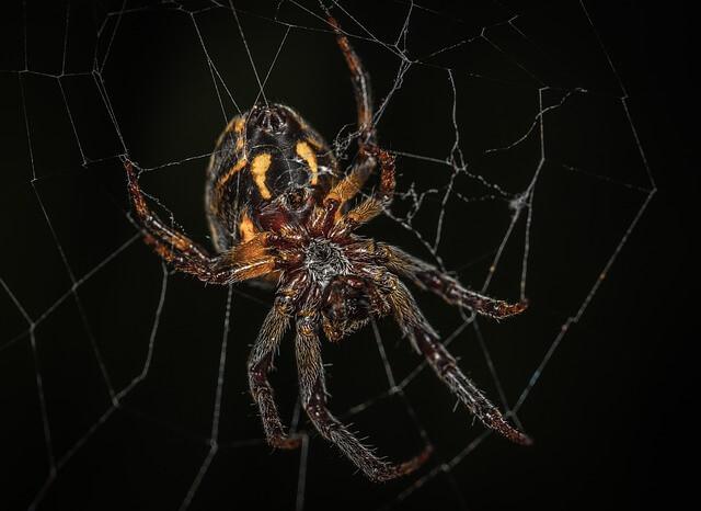 Τι πιστεύουν οι Σκοτσέζοι για τις αράχνες;