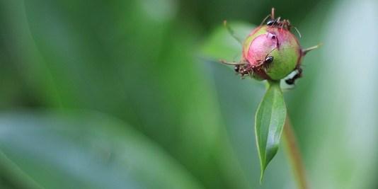 Πως θα απωθήσετε τα μυρμήγκια
