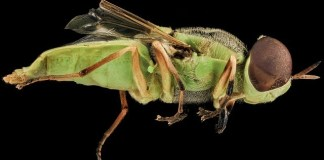 Διώξτε τις μύγες χωρίς τοξικά απωθητικά