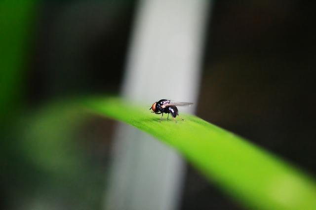 Μάθε κι αυτά για τις μύγες… για να ξέρεις δηλαδή 🙃