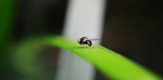 Μάθε κι αυτό για τις μύγες