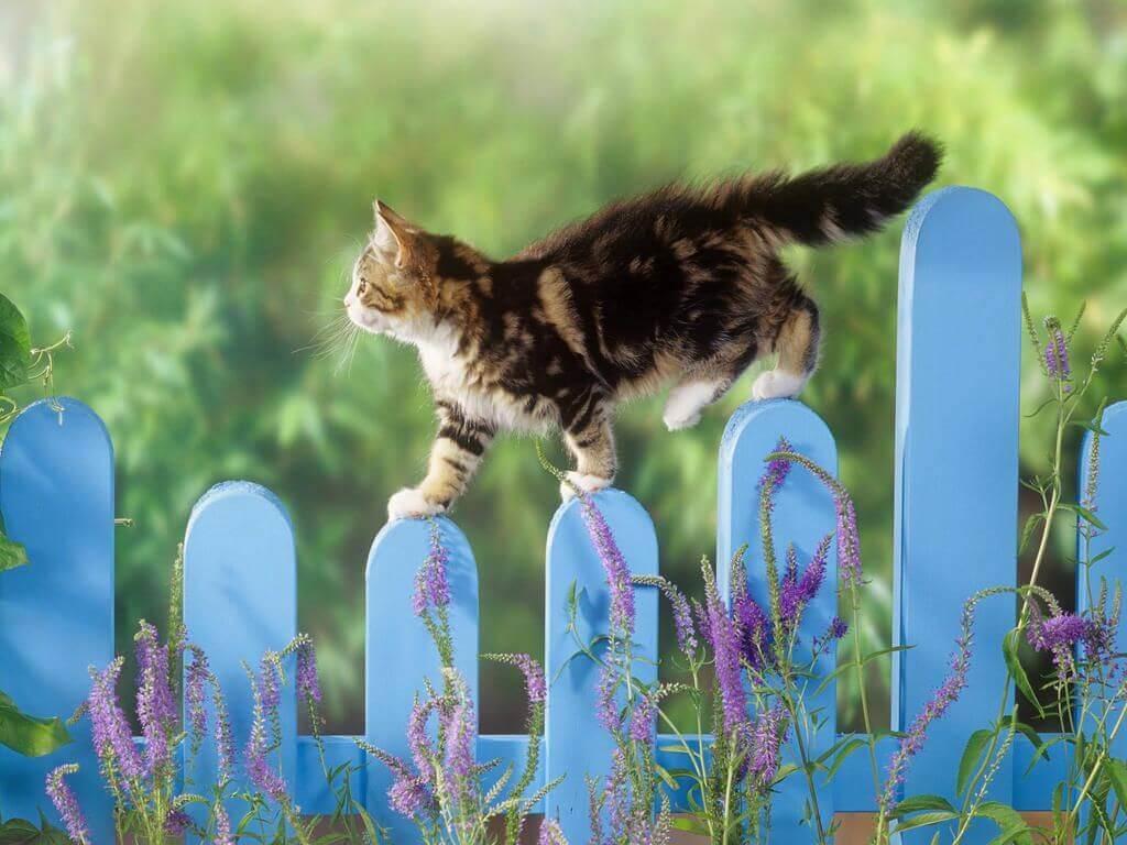8073041f4561 Για να μη σου κάνει μαντάρα τα φυτά η γάτα Mea-Colpa Κάθε Μέρα Νέα ...