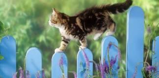 c88eae27b5c2 Για να μη σου κάνει μαντάρα τα φυτά η γάτα