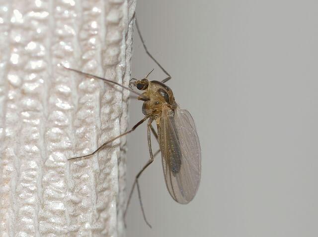 Ο μυρωδάτος τρόπος να διώξεις τα κουνούπια