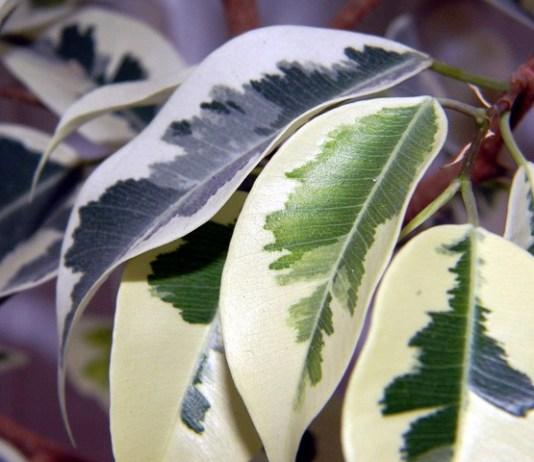 Τα φυτά εσωτερικού χώρου