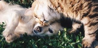 Καναπέδες για σκύλο και γάτα