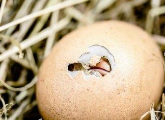 Το αβγό, είναι φρέσκο;