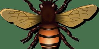 Σε τσίμπησε μέλισσα ή σφήκα;