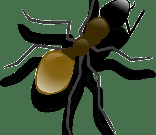 Οικολογικό απωθητικό για τα μυρμήγκια