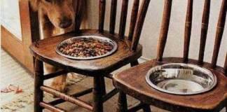 Του σκύλου οι ανέσεις