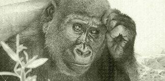 Τι είναι τα ανθρωποειδή;