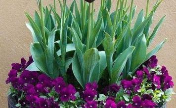 Δημιουργήστε με φυτά