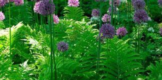 Ενας όμορφος συνδυασμός για τον κήπο