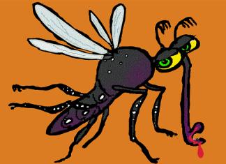 Τα πάντα για το κουνούπι Τίγρης