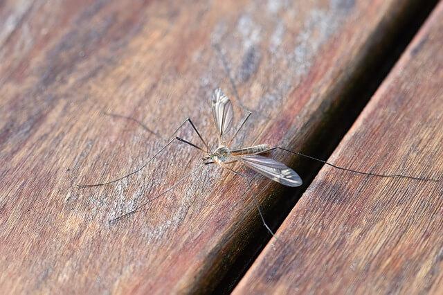 Απωθήστε τα κουνούπια οικολογικά
