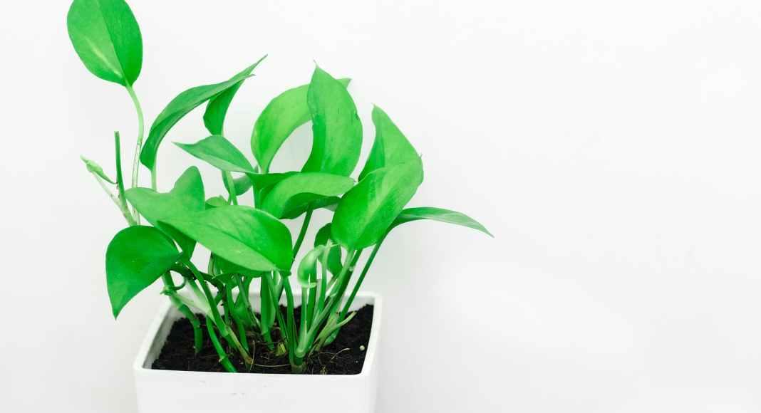 Αυτά τα φυτά αντέχουν σε λίγο φως