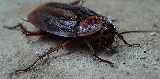 Το κόλπο για να μη μπούνε κατσαρίδες στο σπίτι