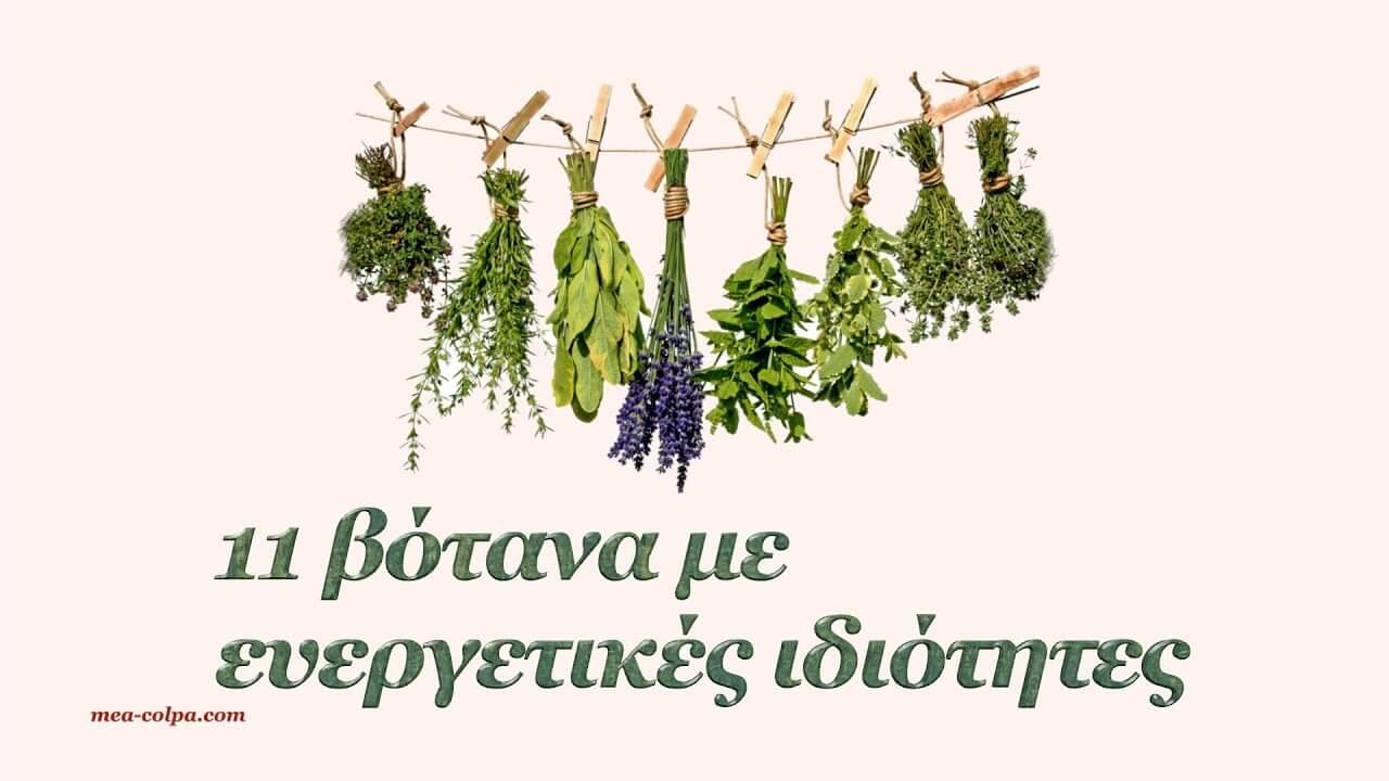 11 βότανα και οι ευεργετικές τους ιδιότητες που πρέπει να γνωρίζουμε