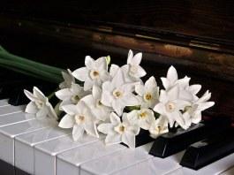 Πως καθαρίζουμε τα πλήκτρα του πιάνου