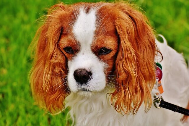 Αν θέλεις ο σκύλος να έχει όμορφη και καθαρή τρίχα