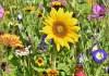 Ποιο είναι το σωστό χώμα για τον ανθόκηπο;