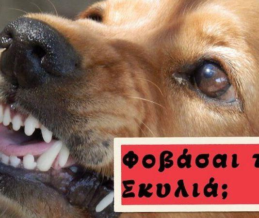 Φοβάσαι τα σκυλιά; Σου έχουμε τις λύσεις