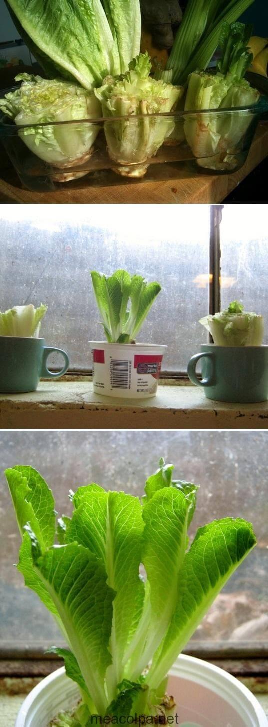 Ο εύκολος τρόπος να φυτέψεις μαρούλι