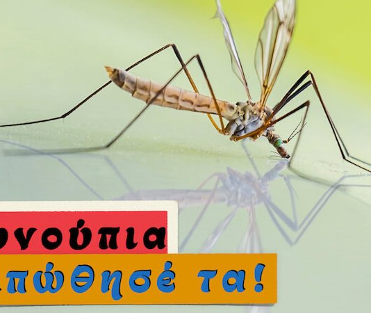 Τώρα που θάρθουν τα κουνούπια, ξέρεις τι θα κάνεις