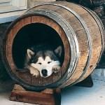 Ενα διαφορετικό σπιτάκι για τον σκύλο