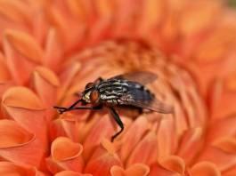 Ενα διαφορετικό κόλπο για να απομακρύνετε τις μύγες