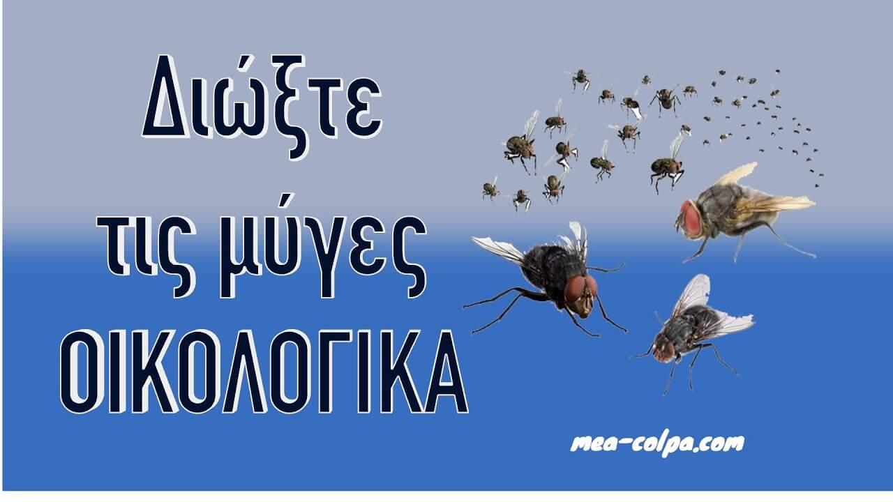 17 Σούπερ Κόλπα για να διώξετε τις μύγες οικολογικά