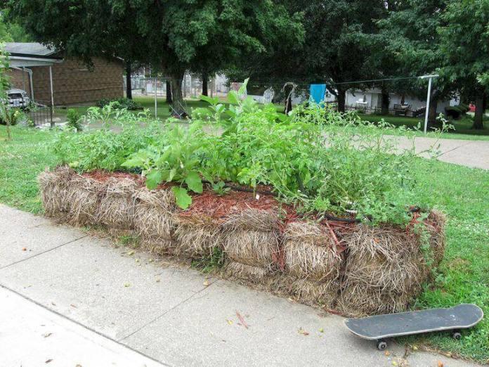 Λαχανόκηπος στα άχυρα