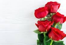 Το τέλειο λίπασμα για τις τριανταφυλλιές