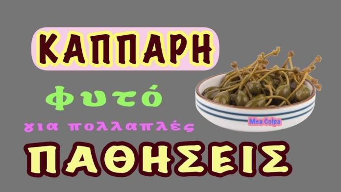 Κάππαρη – το βότανο για τις πολλαπλές παθήσεις