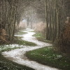 the_white_path_____by_mosredna