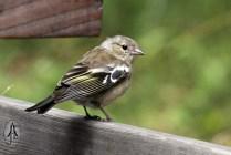 wild bird, a sparrow