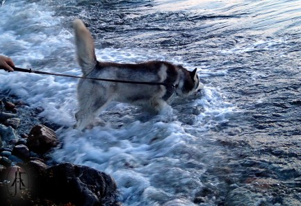 Denali trying to catch the waves