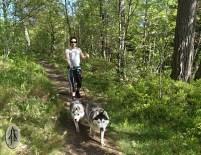 on a hike to Kjerkeåsen; Truls, Stjerne and Denali