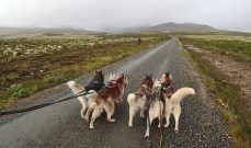 Our dogs that came a long for this walk. And yes we see a lot of lovely doggie buts on our outings