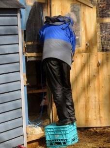 Ede reinforcing the top half of the Dutch Door with heavier duty wire mesh.