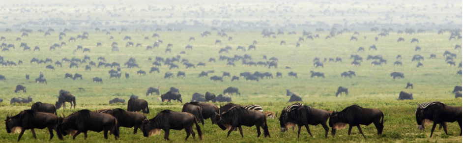Serengeti Grazing Lessons Part II