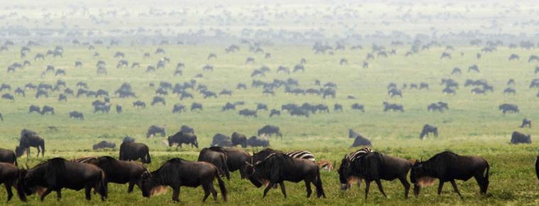 Serengeti Grazing Lessons Part II