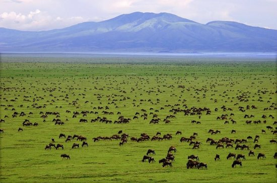 Serengeti grazing lessons Part III