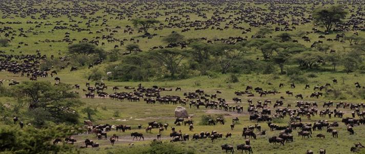 Serengeti Grazing Lessons Part V