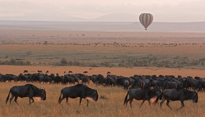 Serengeti Grazing Lessons Part IV